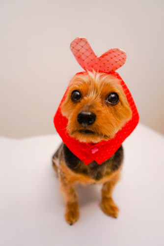 Valentine's Day heart hat