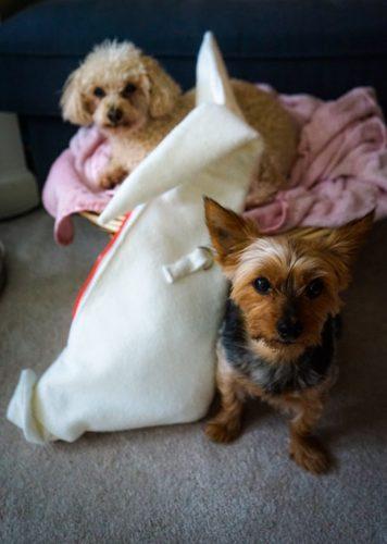 Origami rabbit bag or Pat the Bunny